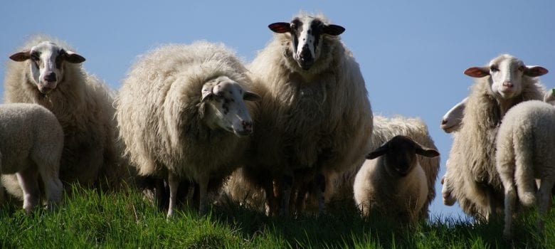 Why should I Install Sheep Wool Insulation?